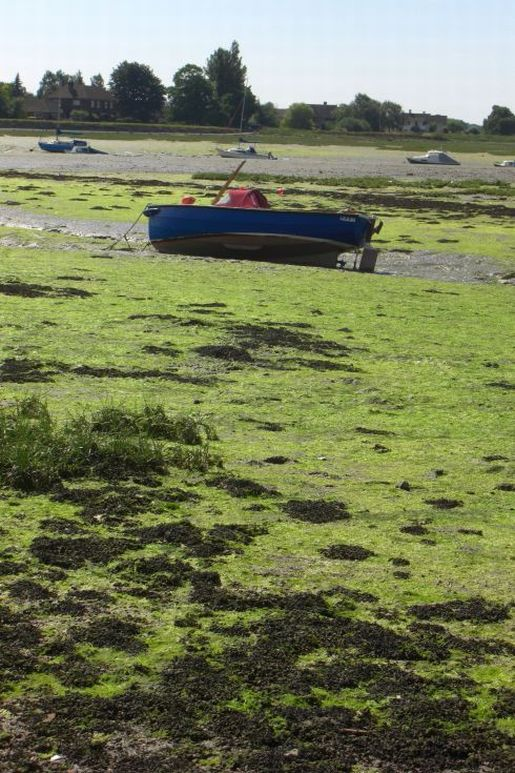 Boats left high and dry by the low tide at Bosham